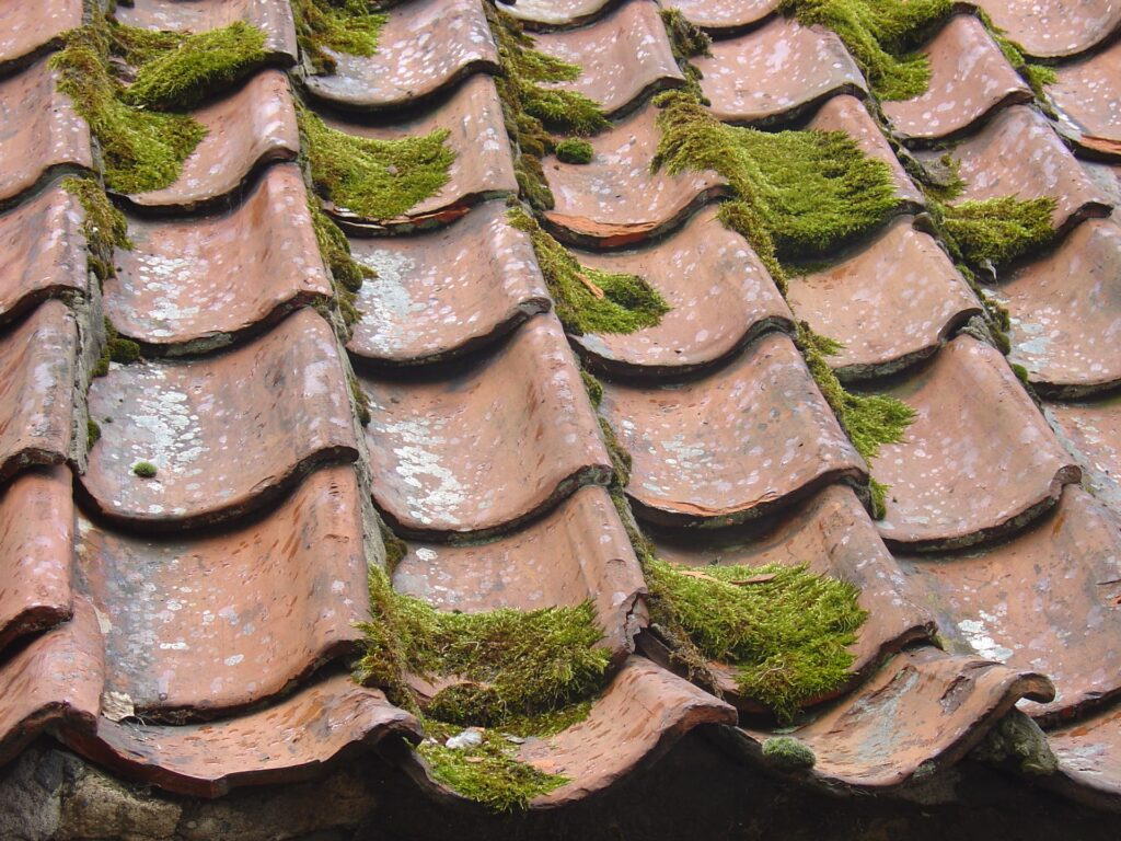 Démoussage de toiture montesson